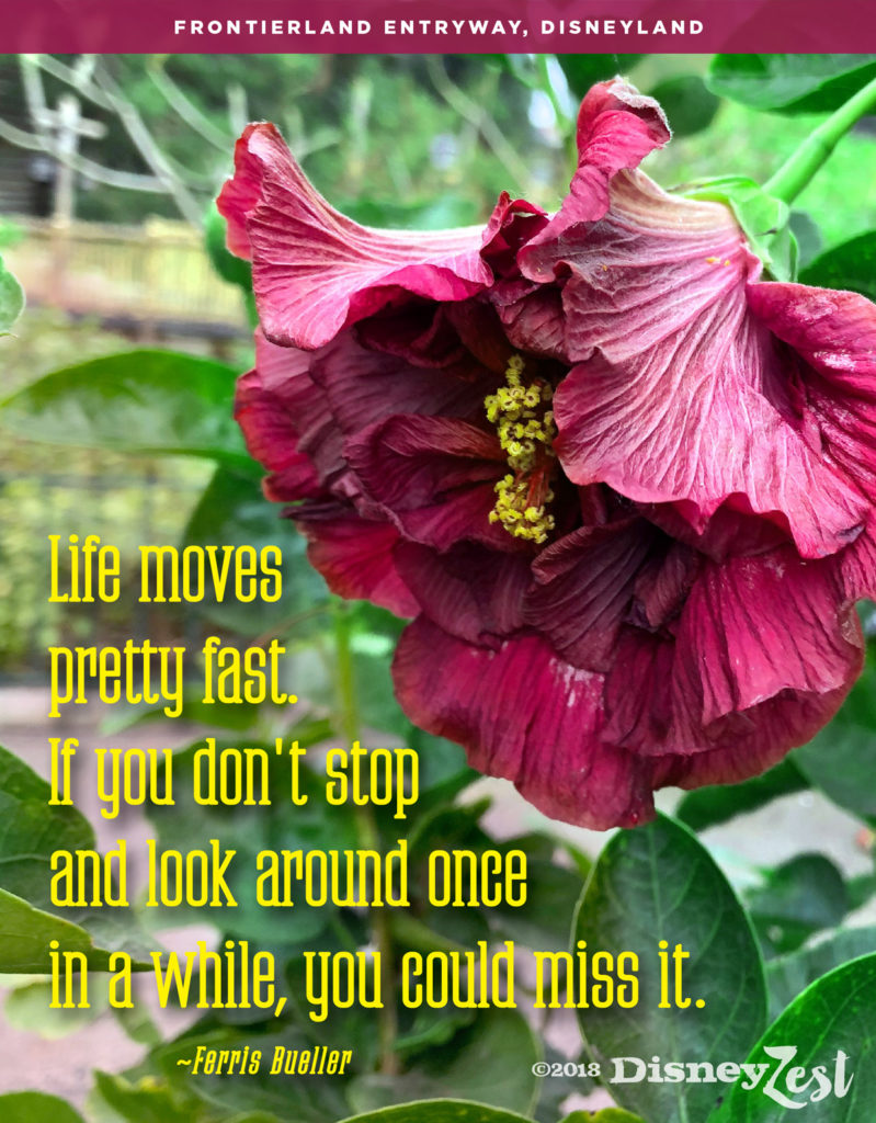 Quotes disneyzest life moves pretty fast izmirmasajfo